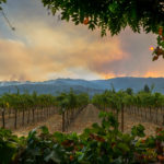 Wine Country Burning: Through the Eyes of a Claims Response Team